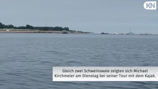 Schweinswale vor Eckernförde