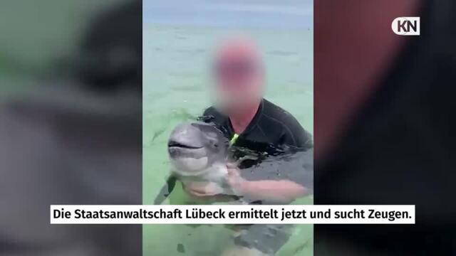Kuscheln mit Wal in Grömitz