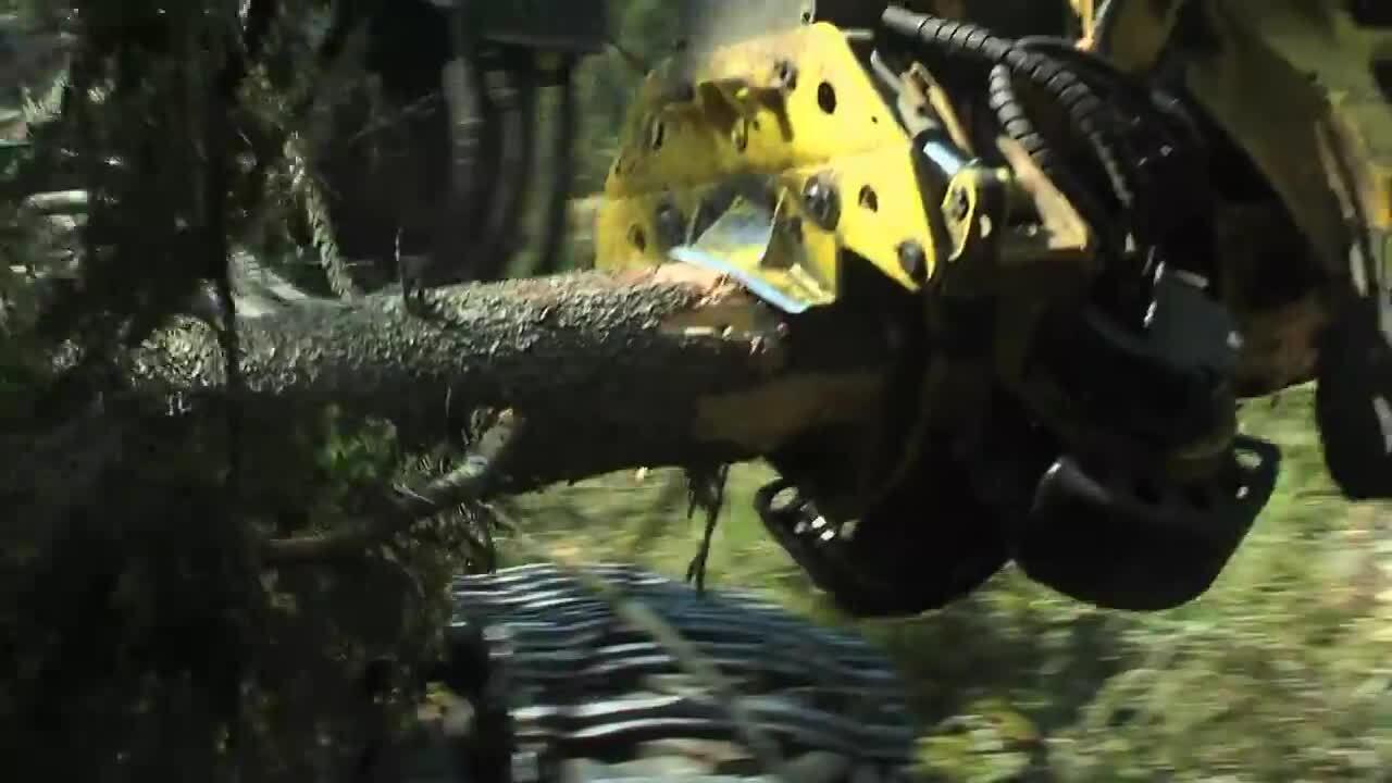 Skog - Avverkning