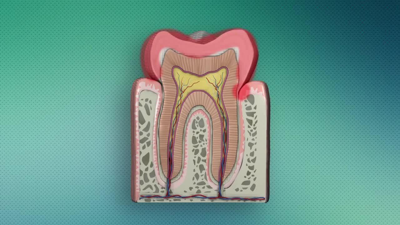 Hygien - Tänder i munnen