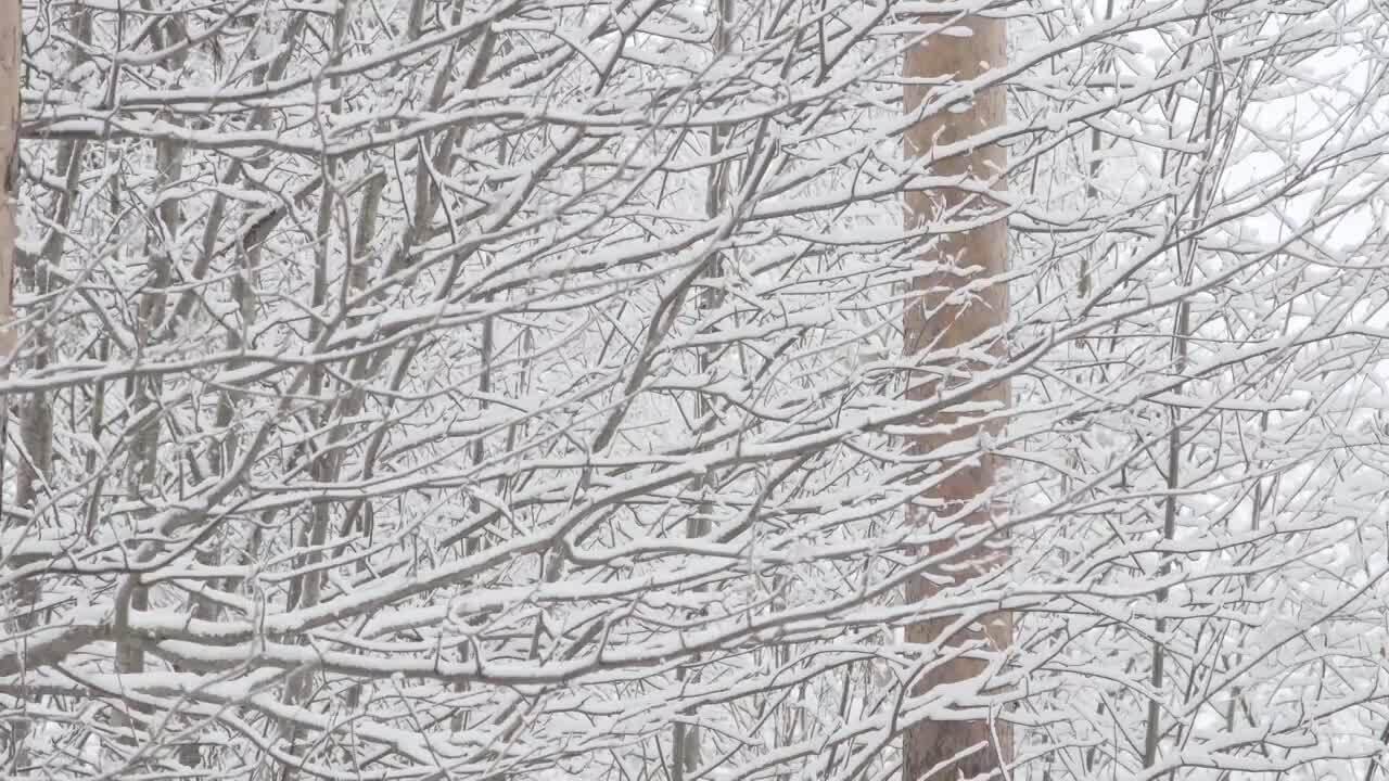 Den vita skogen – vintern