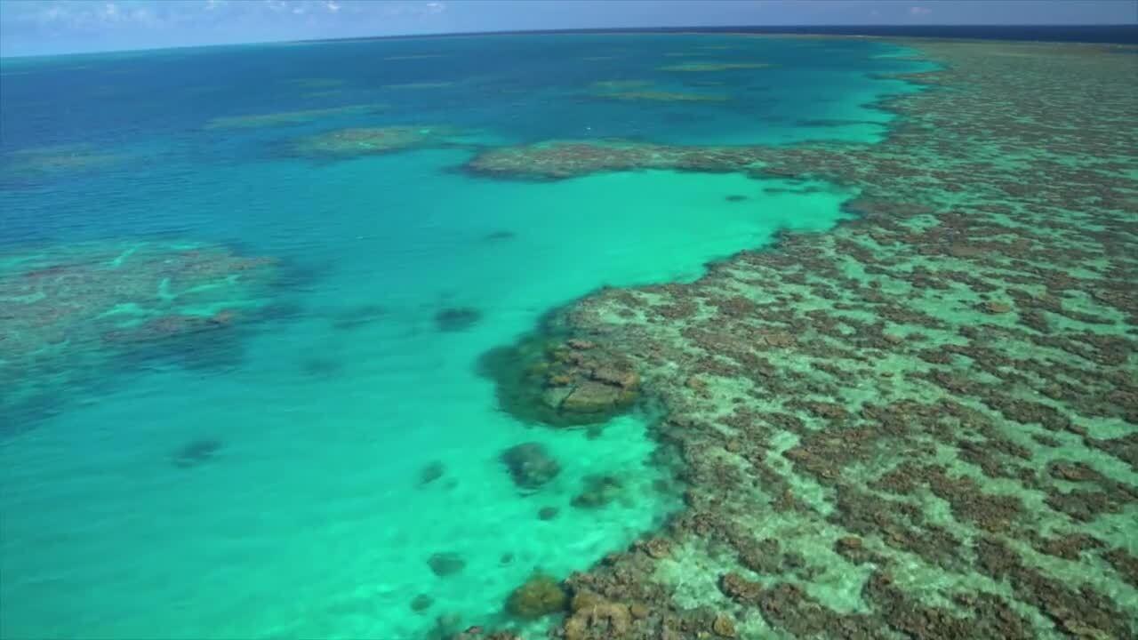 Hav och oceaner – korallrev