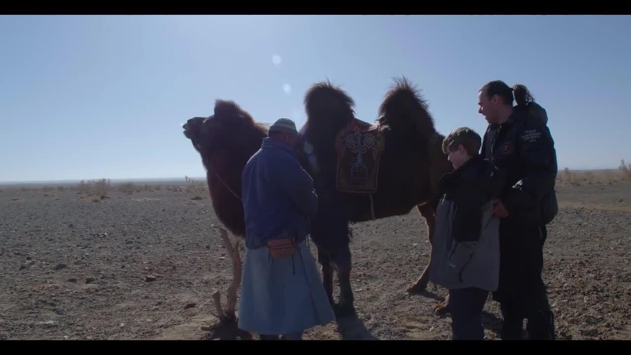 De arktiska kamelerna