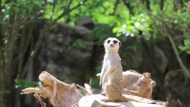 Pfingsten im Zoo Dresden