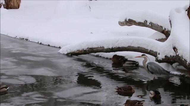 Winter im Zoo Dresden