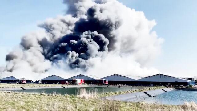 Alt Tellin: Großbrand in Schweinezuchtanlage – vier Ställe mit 5000 Schweinen in Flammen (Video: Philipp Schulz | 30. März 2021)