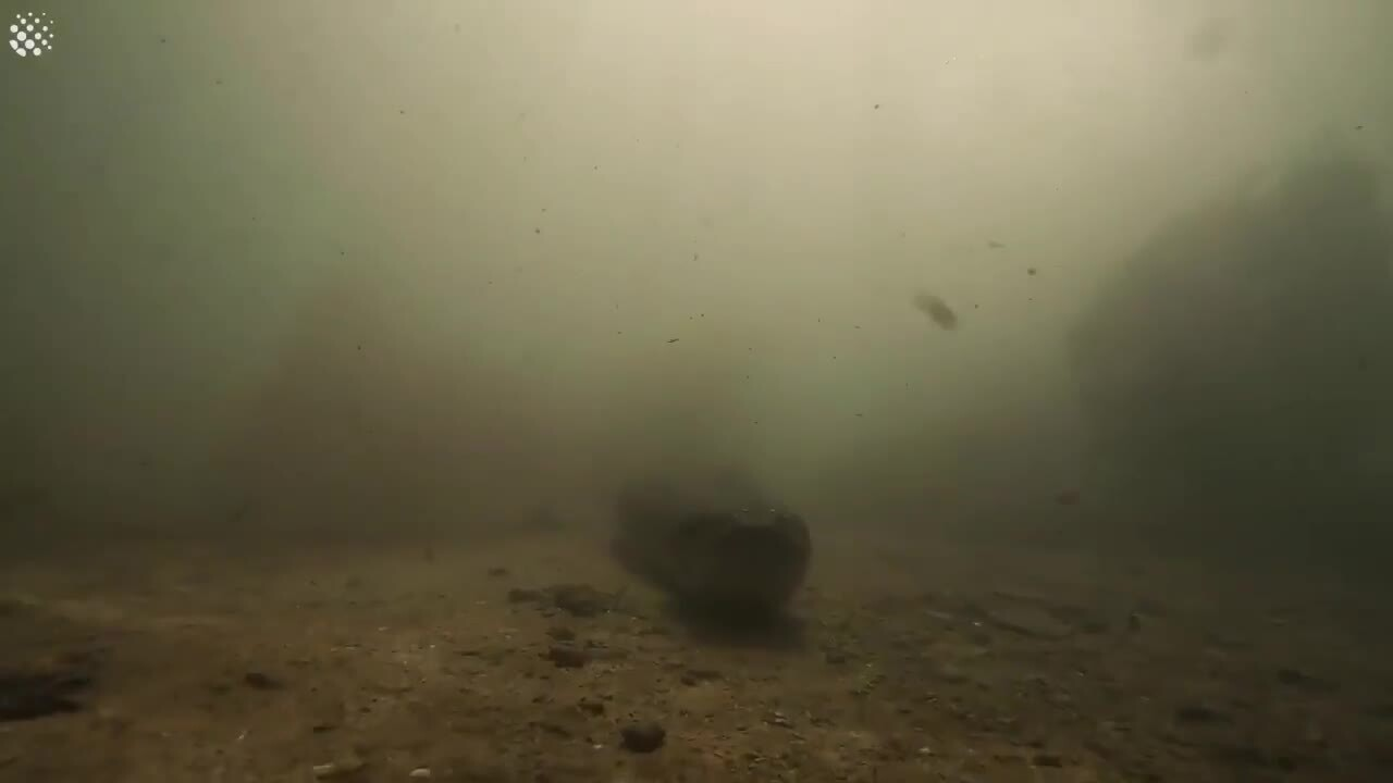 Diver Comes Face-To-Face With Giant Seven-Metre-Long Anaconda