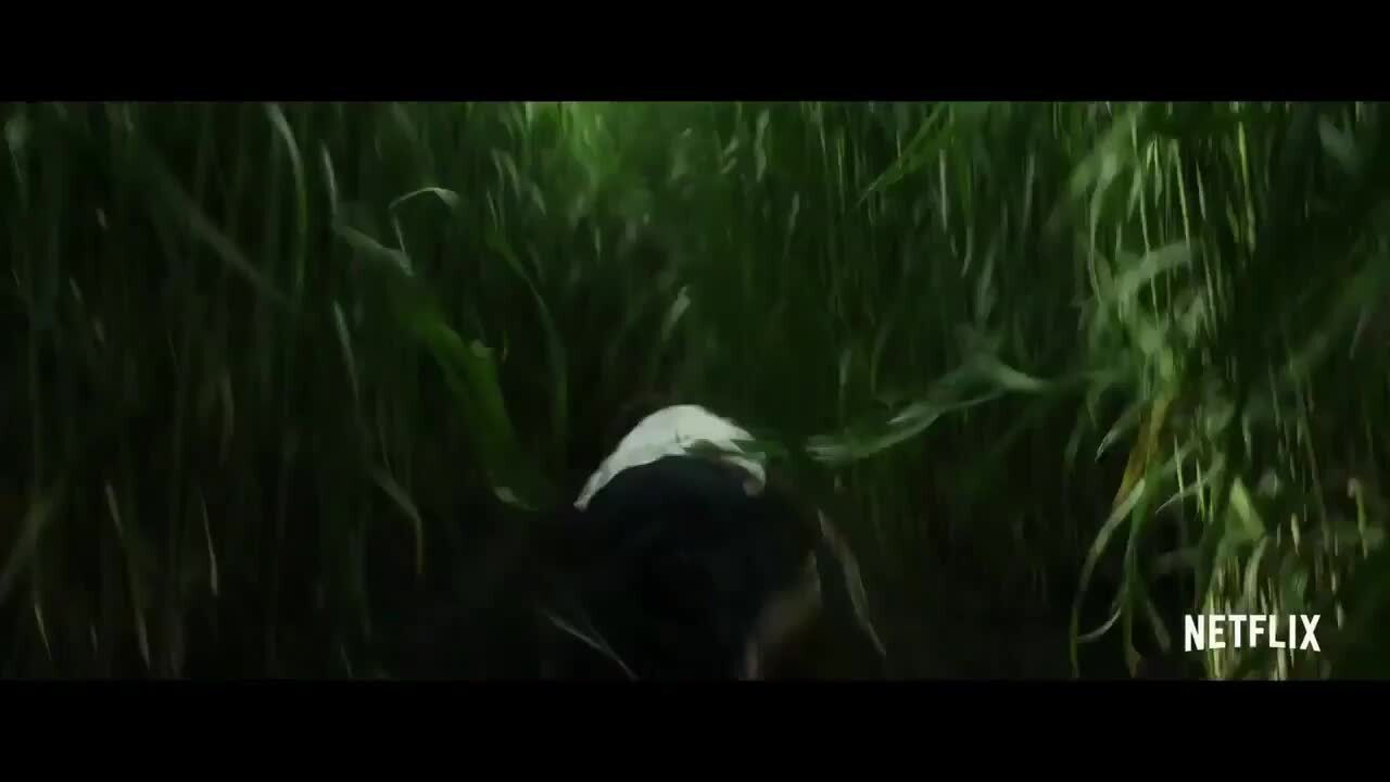 Netflix's New Stephen King Horror In The Tall Grass Is Dividing Opinion