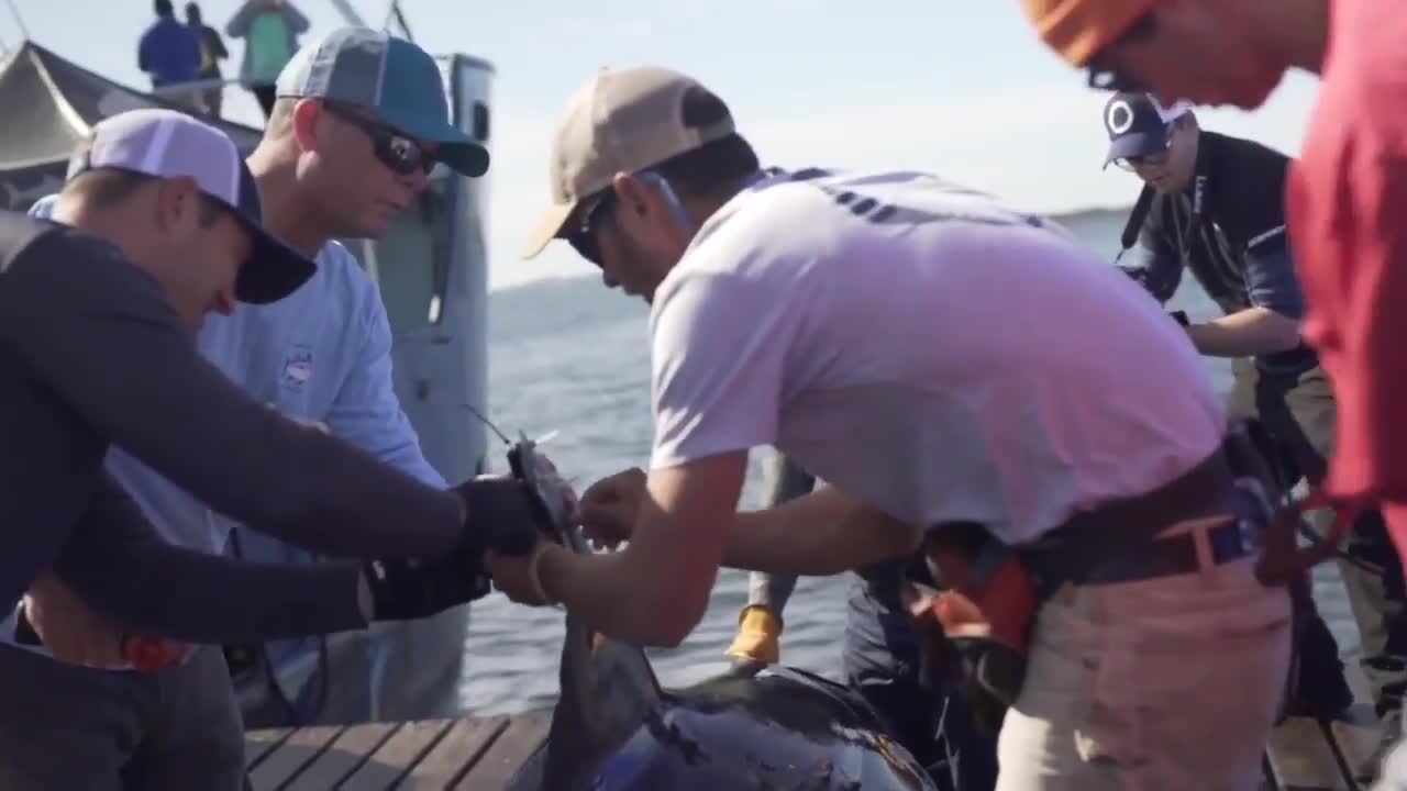 Loads Of Sharks Including 15-Foot Giant Surface Off The US Coast
