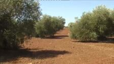La sequía genera pérdidas en el campo