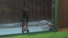 Un mapache y un perro, principal atracción en un zoo de Siberia