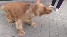 21 de julio, Día Internacional del Perro