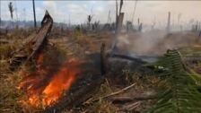 La naturaleza salvaje se enfrenta a un peligroso declive sin precedentes