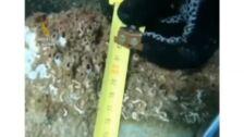 Así es el artefacto explosivo que los GEAS han hallado en una playa de Barcelona
