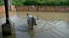 Las inundaciones provocadas por el monzón en el sur de Asia dejan ya 160 muertos