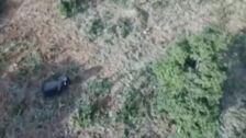 Rescatan a una cría de elefante atrapada en un estanque en China