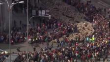 Rebaños de ovejas ocupan el centro de Madrid en la Fiesta de Trashumancia