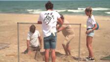 Nacen las 50 tortugas boba custodiadas de El Saler