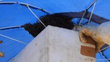 Retiran un enjambre de abejas de una sombrilla en la playa de Ereaga