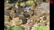 Aparece el cadáver de un delfín en Pasaia