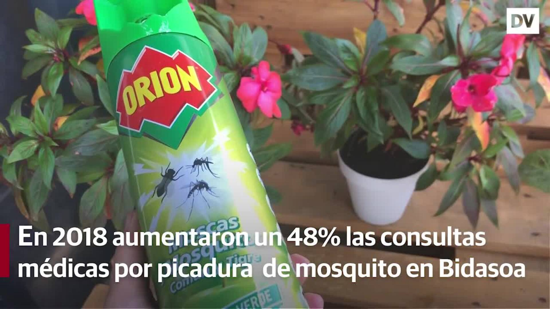 Alerta por el mosquito tigre en Irun