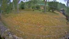 La osezna 'Saba', trasladada a un recinto en semilibertad de León