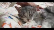 Abandonan a un gato en Olloniego
