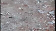 Ratas en la calle Las Huertas de Santoña