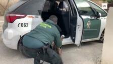 La Guardia Civil captura a un buitre que se posó desorientado en la Lonja de Cieza