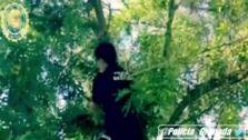 Tres policías locales de Granada rescatan a un gato atrapado en un árbol