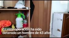 Agentes de la policía local de Granada incautan 123 plantas de marihuana escondidas en una nave de un polígono industrial de Granada