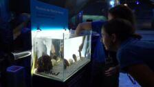 Nace una cría de tiburón bambú en el Oceanogràfic de Valencia