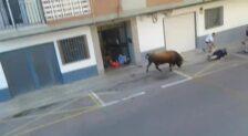 Un hombre muere tras ser corneado por el toro en Chiva (Valencia)