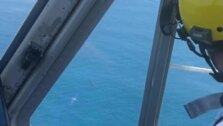 Avistan tres ballenas frente a Dénia y Xàbia