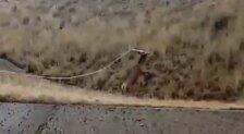Rescate de un ciervo por los brigadistas de León