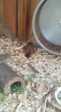 Eichhörnchen Flippi