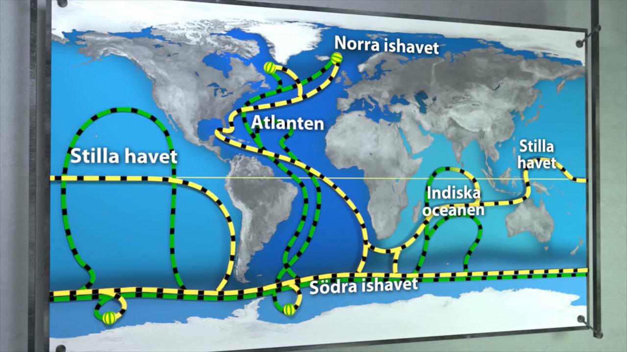Hav och oceaner – det globala marina transportbandet