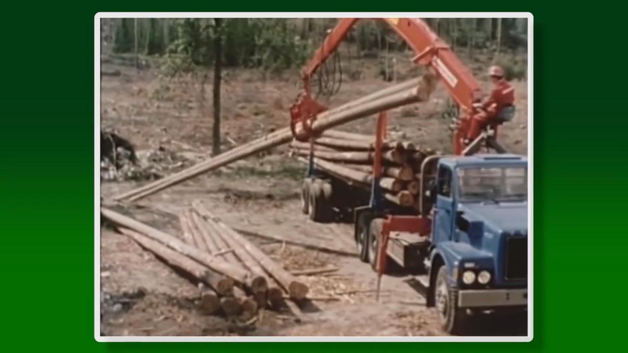 Skogsbrukets historia