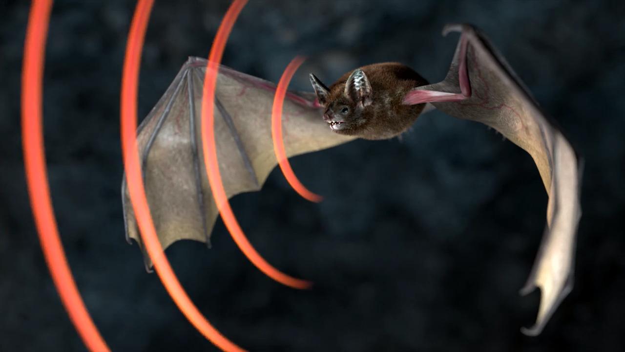 Däggdjurens anpassningar – Fladdermus