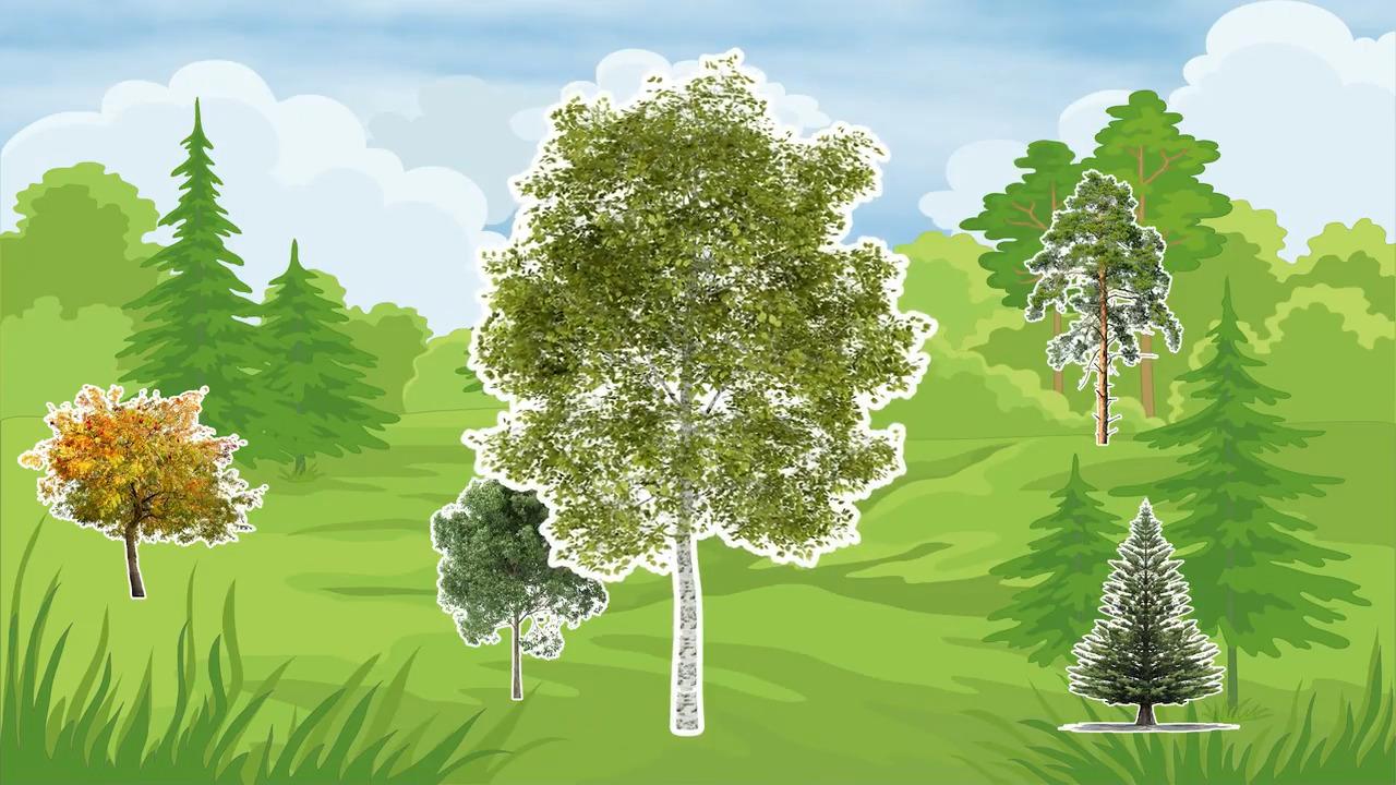 Våra träd – Björken