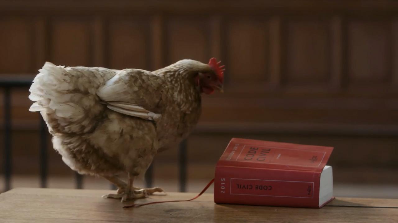 Har djur rättigheter?