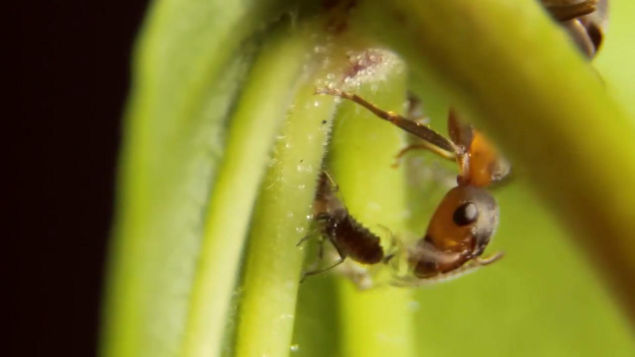 Kryp på! Myror