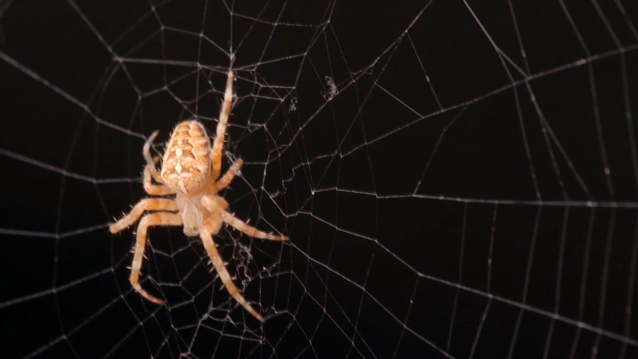 Kryp på! Spindlar