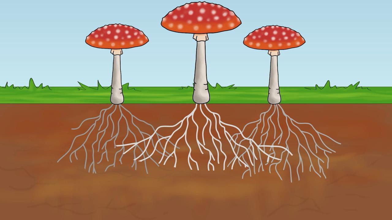 Svampar – Vad är en svamp?