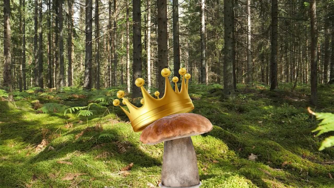 Svampar – De vanligaste svamparna i skogen