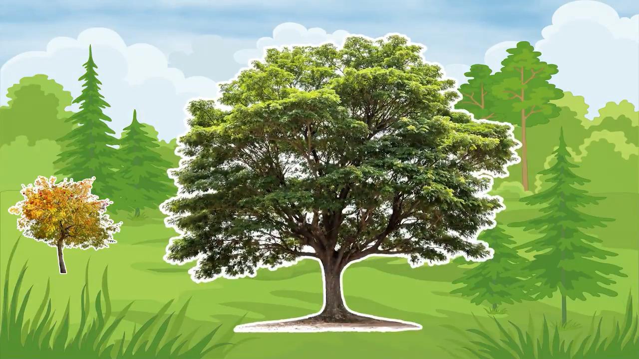 Våra träd – Eken