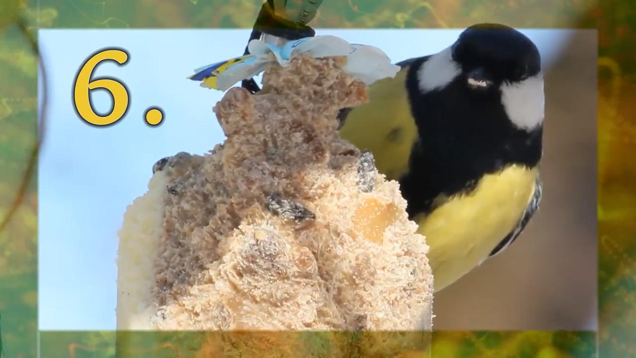 Vingar och näbbar – vårfåglar (övningar)