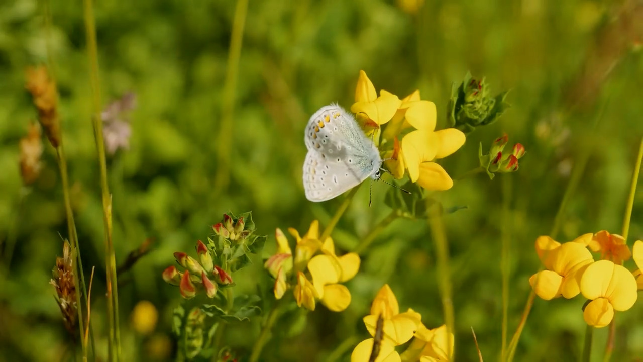 Sommarängen – ett artrikt ekosystem