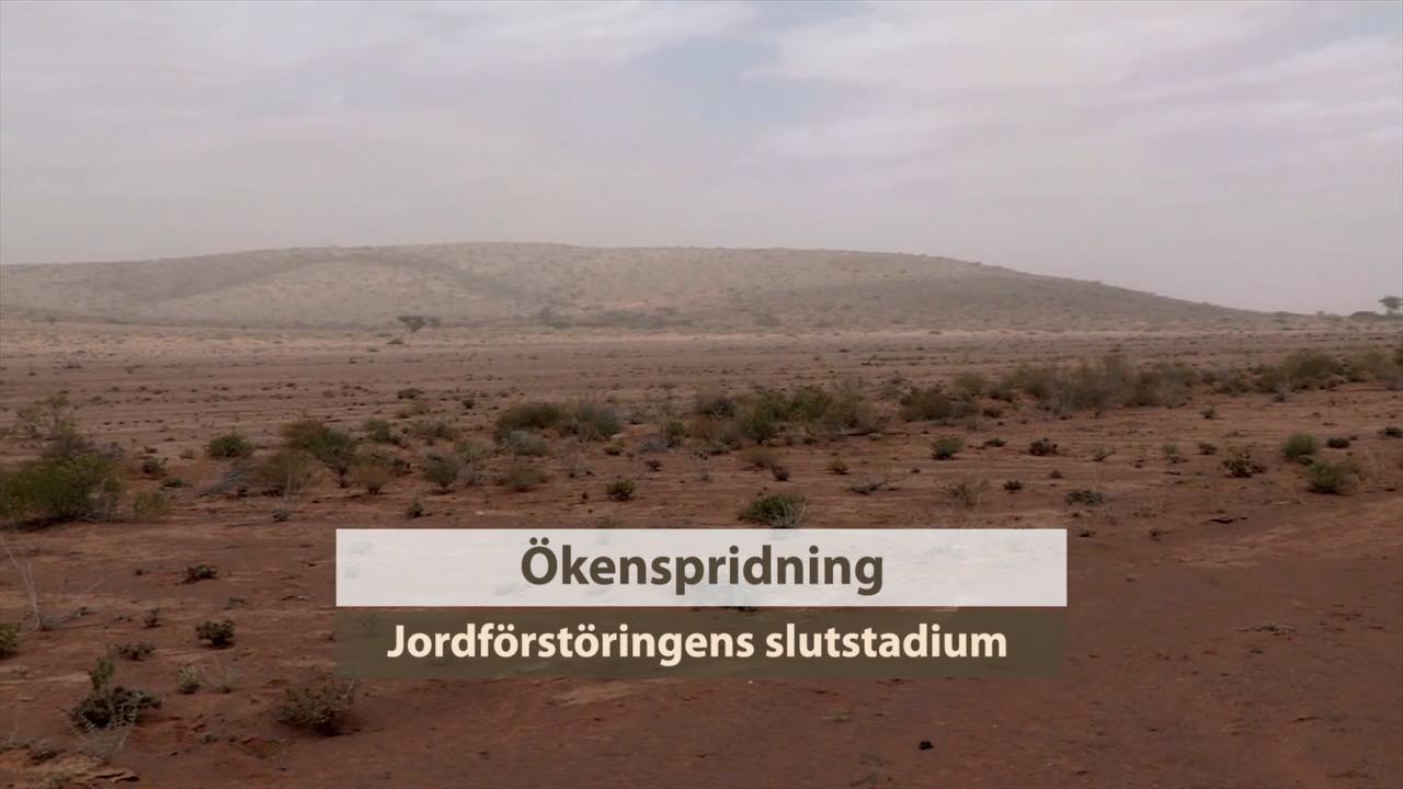 Ökenspridning – Sahelzonen