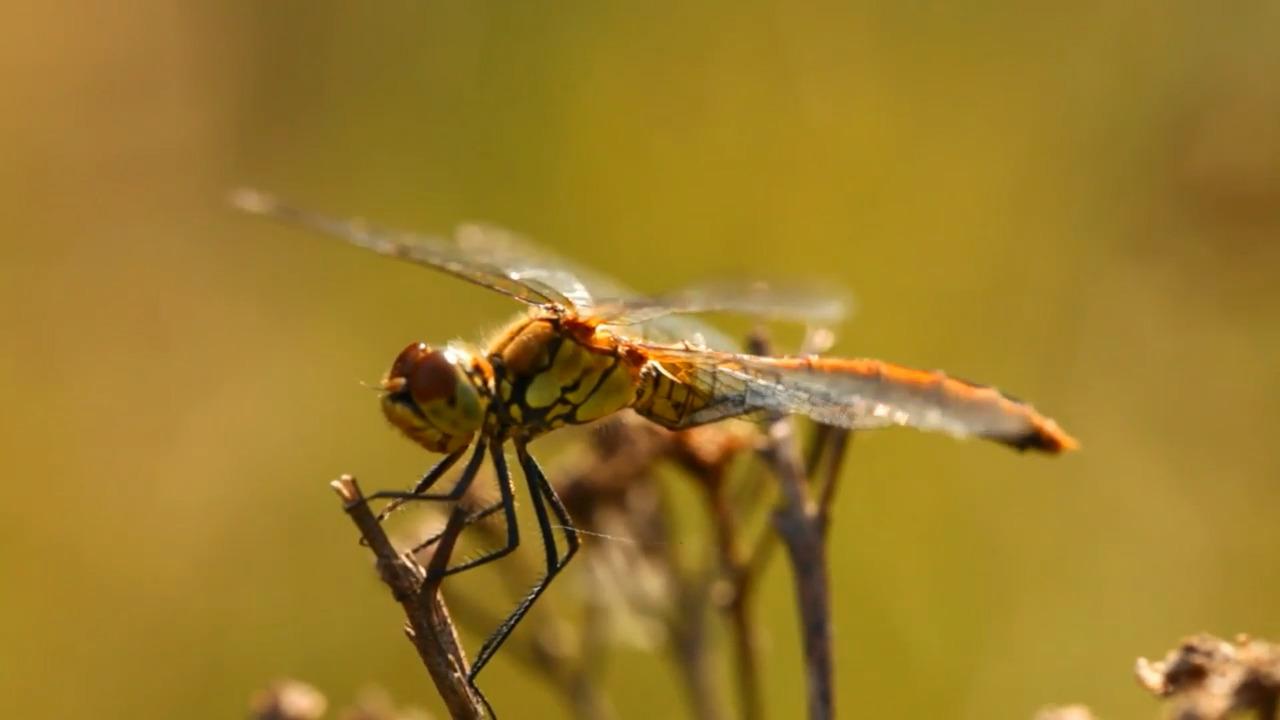 Insekter – anatomi och fortplantning
